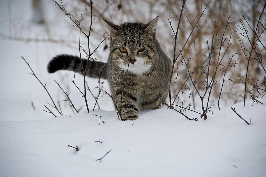 cat-188088_1280