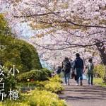 春到来!小樽の桜名所7選とマイナーだけどオススメの桜スポット
