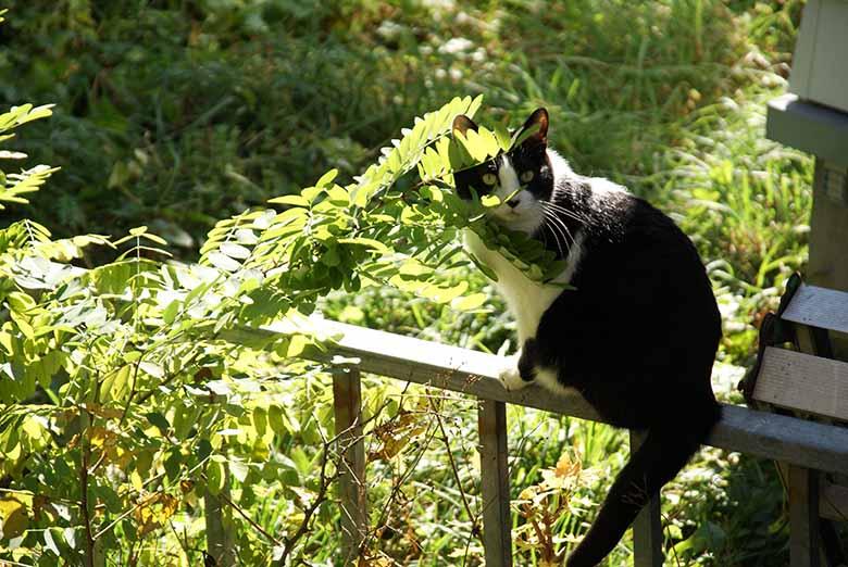 水天宮付近の猫