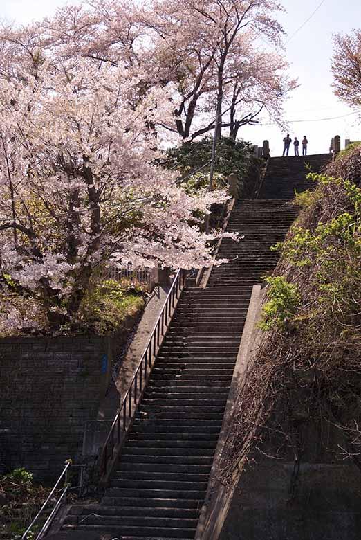 外人坂の階段と桜