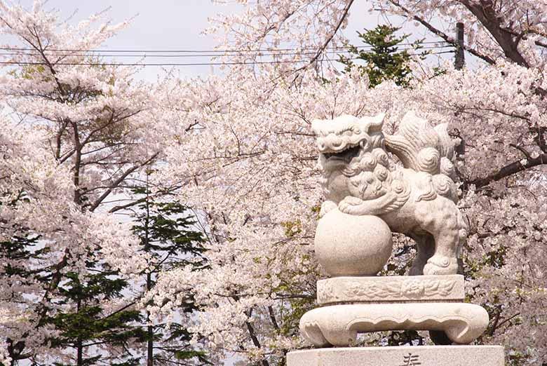 水天宮の桜