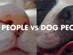 なぜテレビの動物番組は犬がメインなのか:猫派と犬派の性格分析