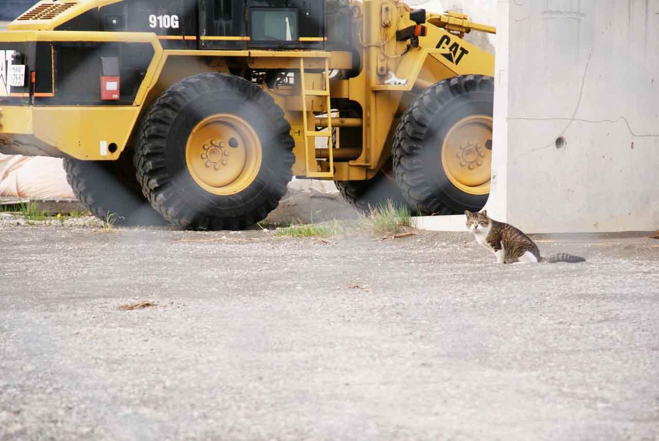 小樽猫スポット「手宮厩岸壁」