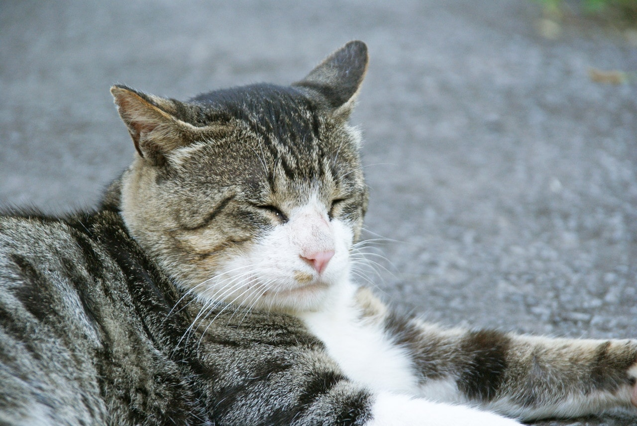 祝津漁港の近くで見かけた猫さん