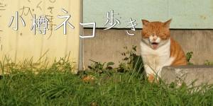 小樽の猫の写真「小樽ネコ歩き」