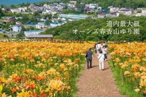 道内最大級!オーンズ春香山ゆり園は7月下旬~8月中旬が見ごろです!