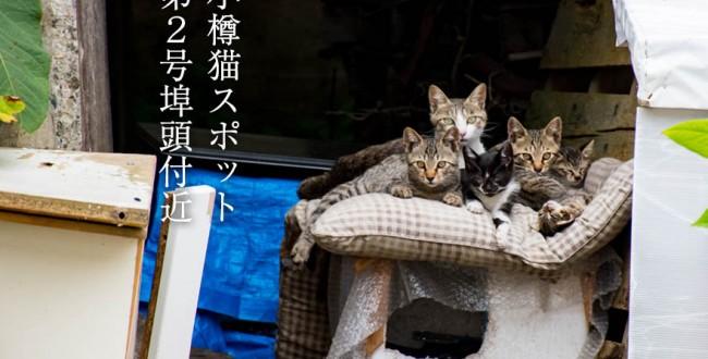 小樽猫スポットその2「小樽港・第2号埠頭付近」