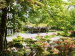 満開のツツジとフジの小樽公園