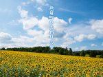 北海道の夏を彩る150万本のひまわり!北竜町ひまわりの里