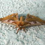滝ノ上駅にいたモフモフの蛾
