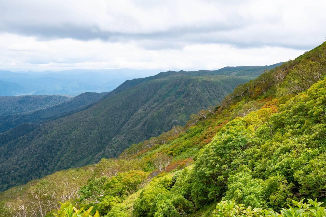 黒岳登山道