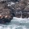 【小樽】野生のトドやオジロワシを見よう!冬の祝津パノラマ展望台