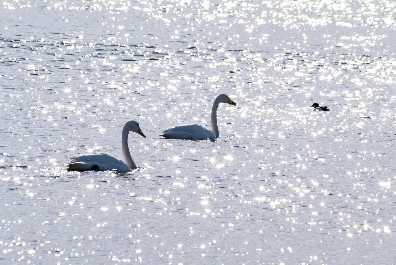 網走濤沸湖