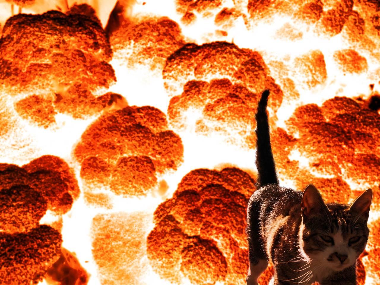 ブロッコリーから大爆発を作るチュートリアル