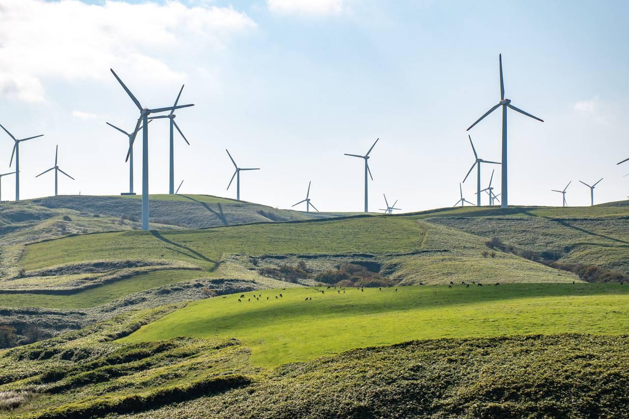 宗谷岬ウインドファームの風車群と宗谷黒牛