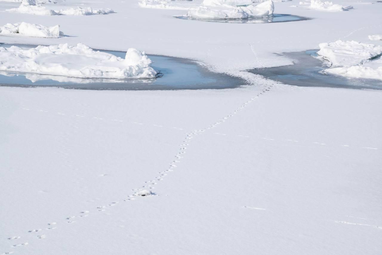 遠音別橋の流氷