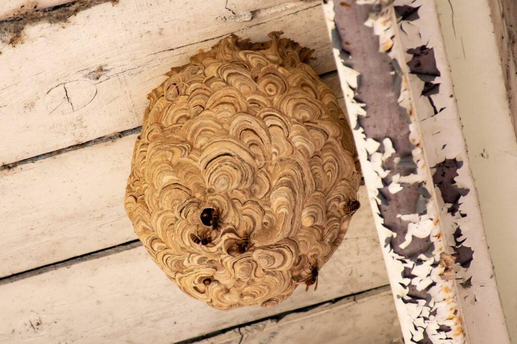 芦別駅ホームにあった蜂の巣