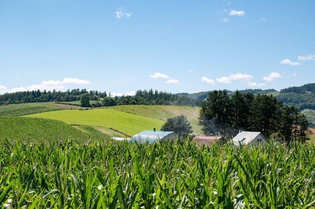 パノラマロード花江周辺の景色